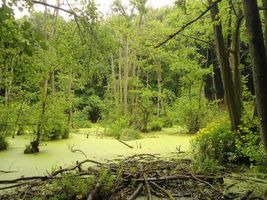 Photo free forest, trees, swamp