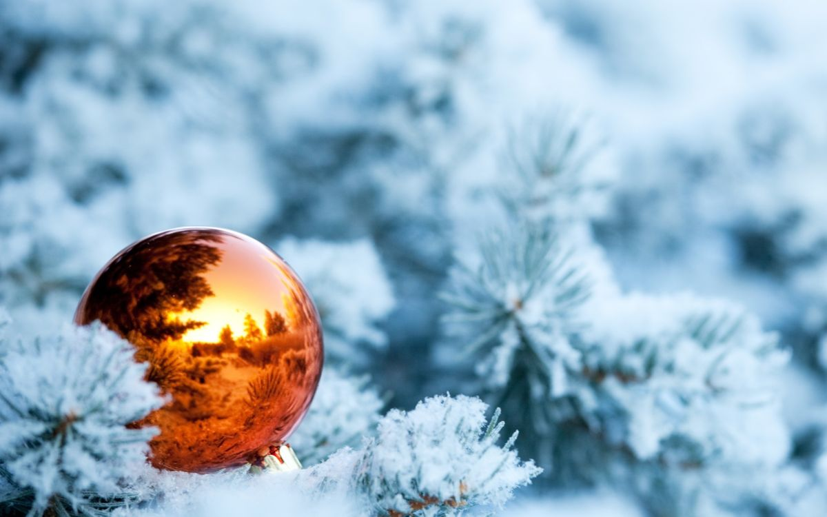 Фото бесплатно Оранжевый новогодний шар, снежные ветки, снег, отражение, шар, новый год