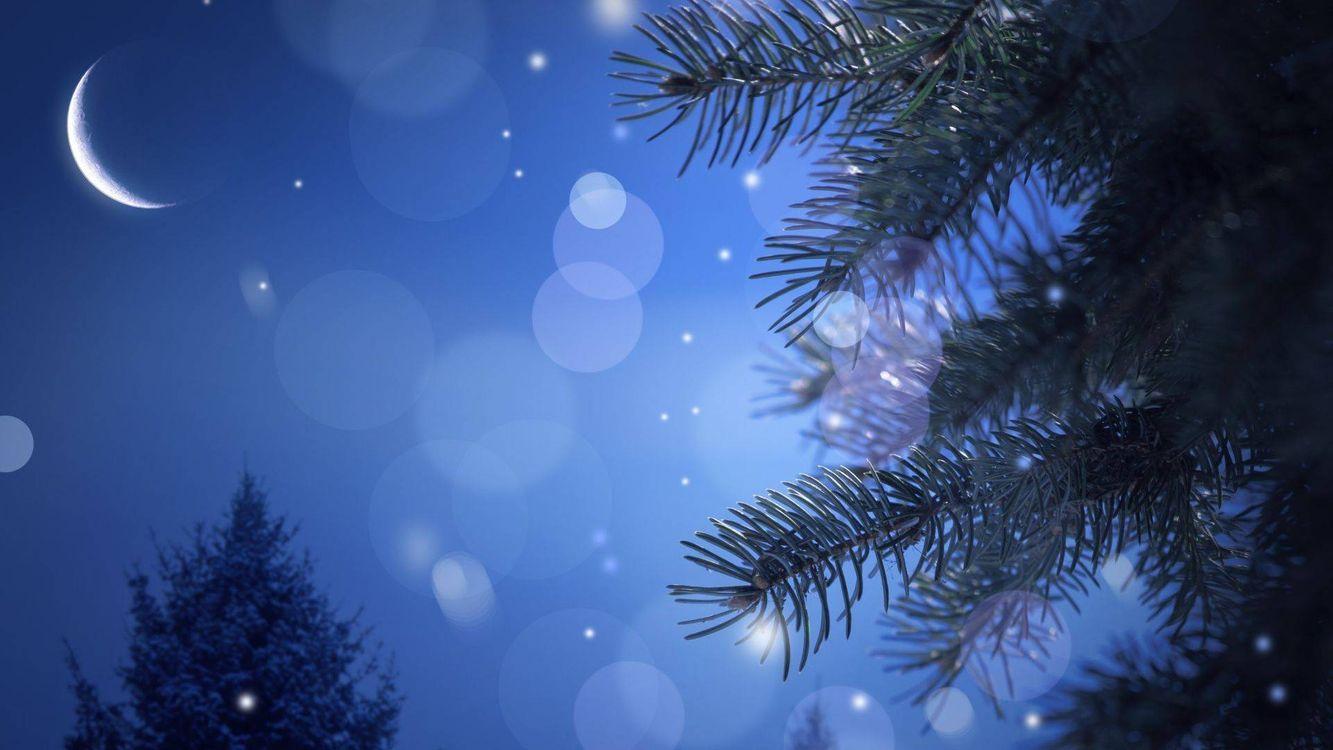 Фото бесплатно Ёлка и луна, блики, ветви, луна, новый год - скачать на рабочий стол