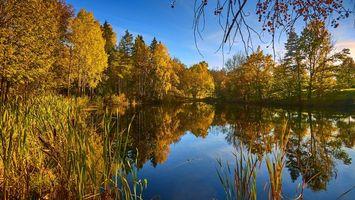 Заставки Vollen, Norway, осень, озеро, деревья, пейзаж