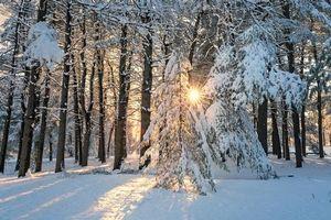 Бесплатные фото зима,лес,деревья,солнечные лучи,снег,сугробы,пейзаж
