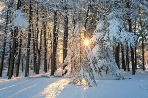 Заставки зима,лес,деревья,солнечные лучи,снег,сугробы,пейзаж