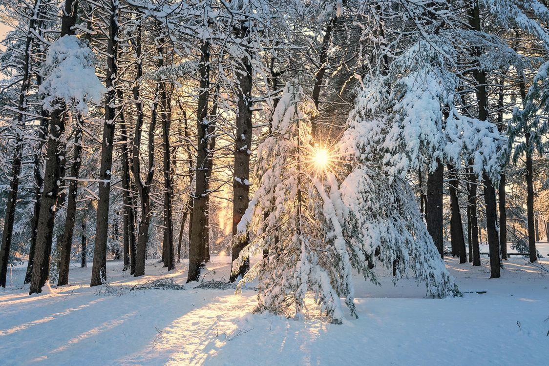 Обои зима, лес, деревья, солнечные лучи, снег, сугробы, пейзаж на телефон   картинки пейзажи