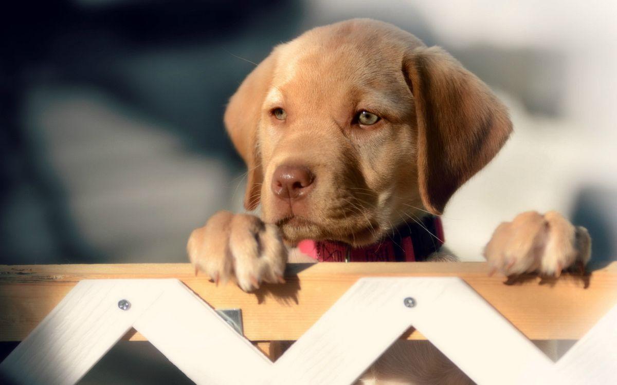 Фото бесплатно ограда, щенок, морда - на рабочий стол