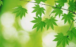 Бесплатные фото канопля,листья,стебель,трава