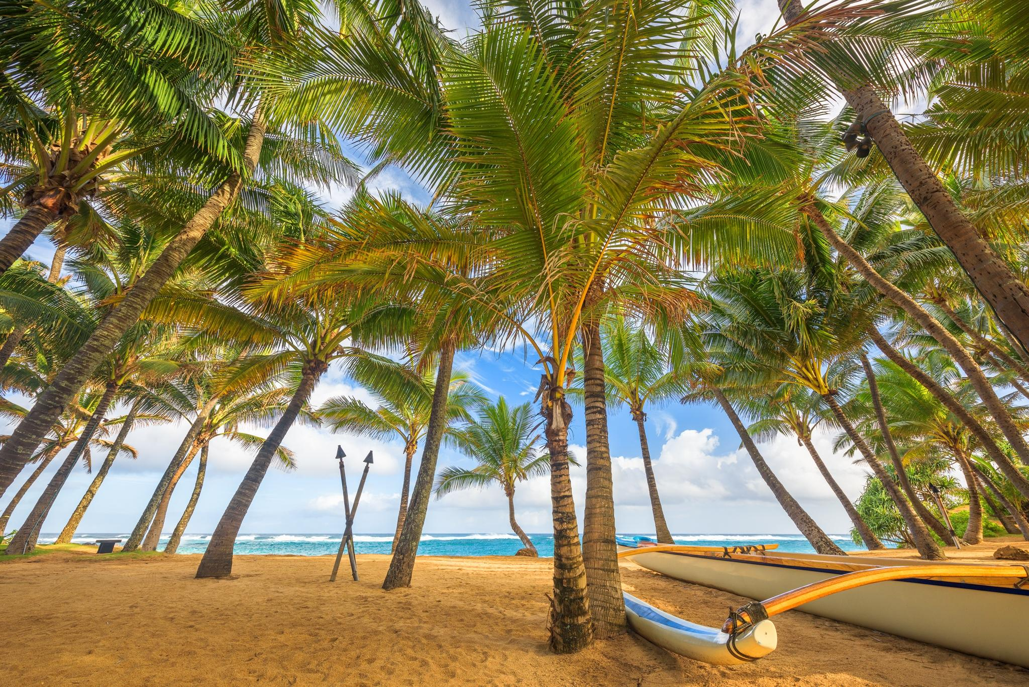 обои море, пальмы, пляж, лодка картинки фото