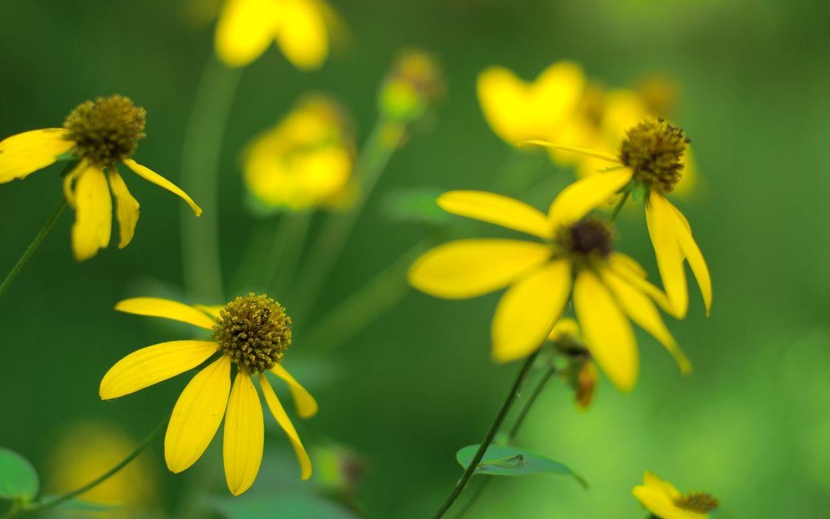 Фото бесплатно лепестки, желтые, тычинки, стебли, листья, зеленые, цветы - скачать на рабочий стол