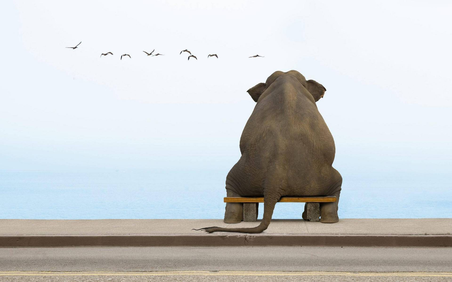 Обои набережная, лавочка, слон, море