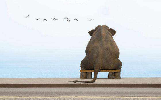 Фото бесплатно набережная, лавочка, слон