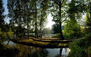 Фото бесплатно река, деревья, кустарник, коряги, трава, зелень