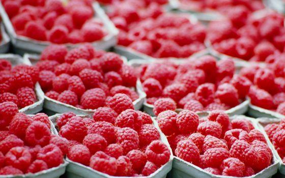 Фото бесплатно ячейки, ягода, малина, красная, порции, витамины