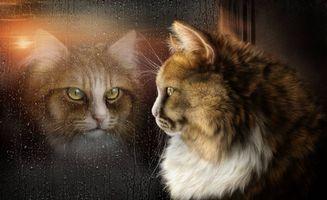 Фото бесплатно кот, отражение, окно, стекло, капли, art