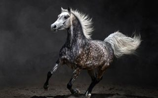 Photo free horse, tail, grace