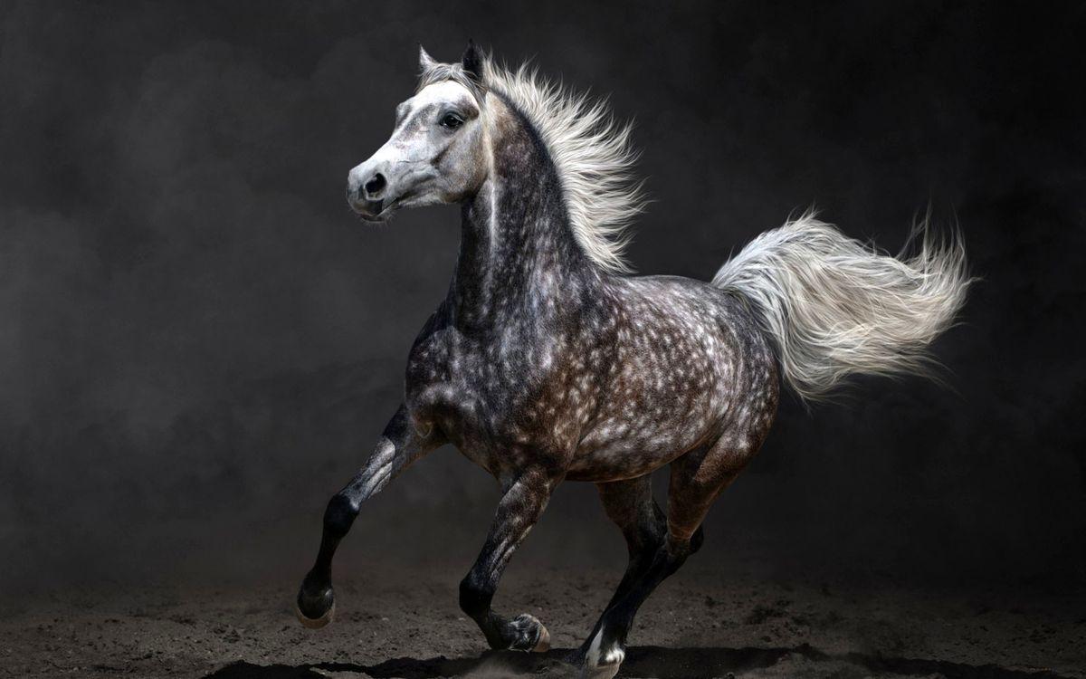 Фото бесплатно конь, лошадь, грива, хвост, грация, животные - скачать на рабочий стол