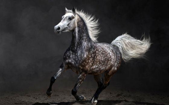 Фото бесплатно конь, лошадь, грива