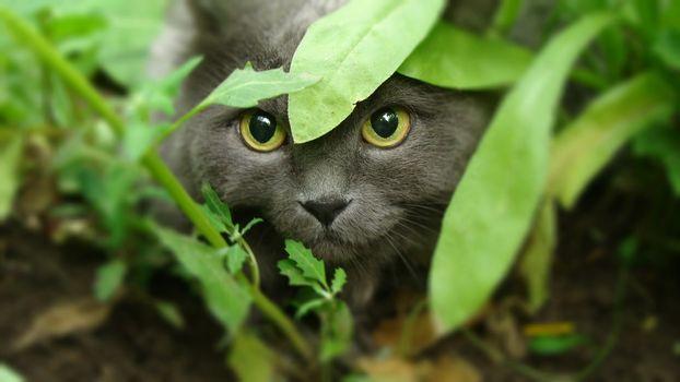 Фото бесплатно кошка, крадется, трава