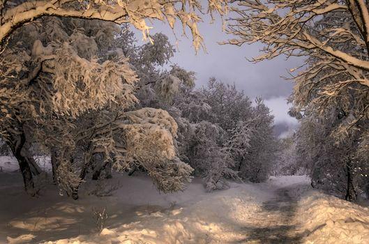 Фото бесплатно лесная дорога, сугробы, деревья