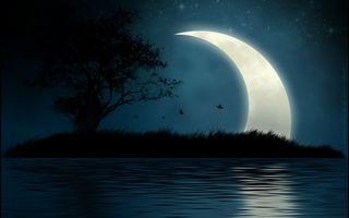 Бесплатные фото ночь,река,остров,трава,дерево,птицы,луна