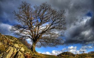 Бесплатные фото осень,камни,трава,дерево,небо,облака