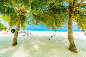 Фото бесплатно пейзаж, побережье, пальмы