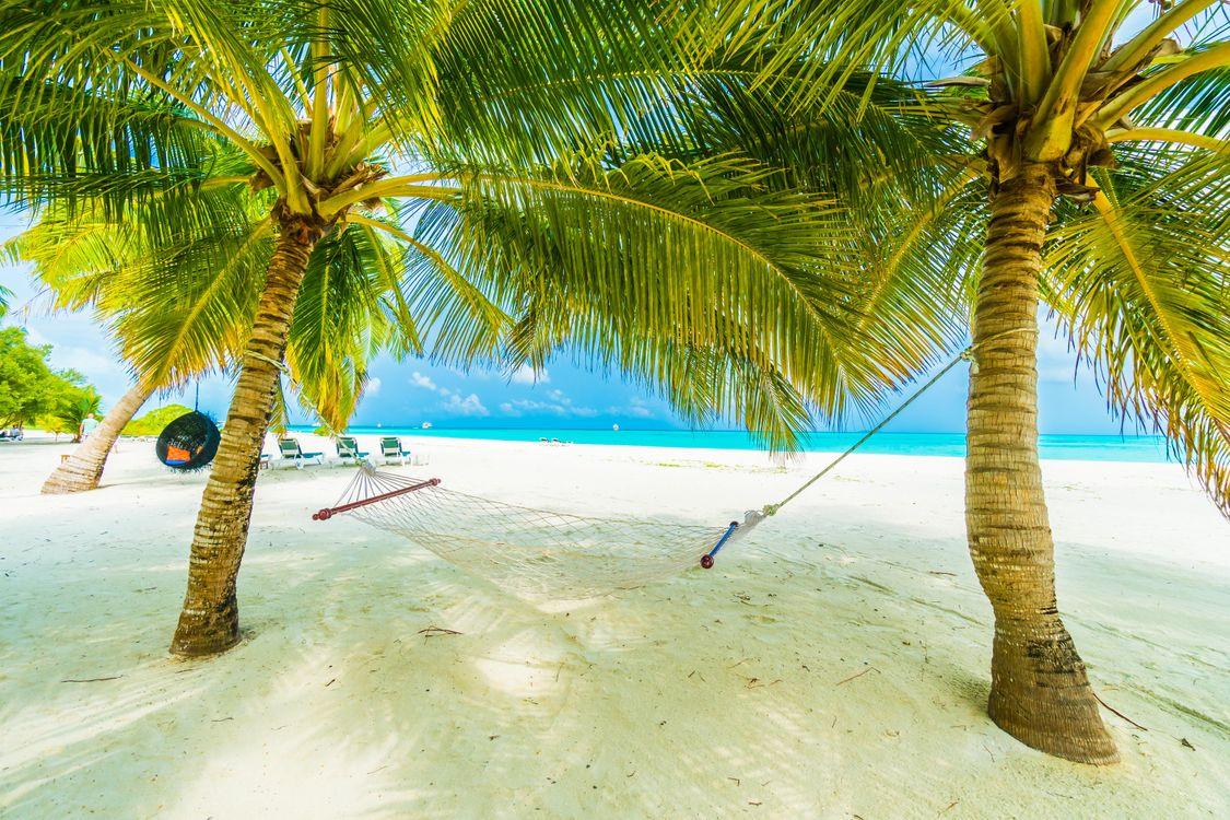 Фото бесплатно остров, море, океан, берег, пляж, пальмы, пейзаж, Maldives island, пейзажи