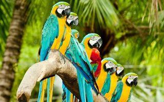 Бесплатные фото попугаи, пальмы, джунгли, ветка