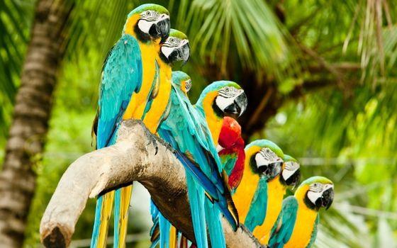 Бесплатные фото попугаи,пальмы,джунгли,ветка
