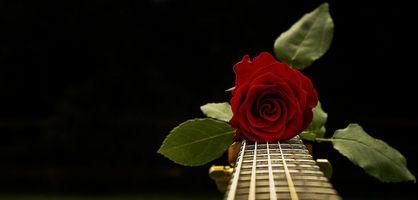 Бесплатные фото роза,цветок,флора,гитара,струны