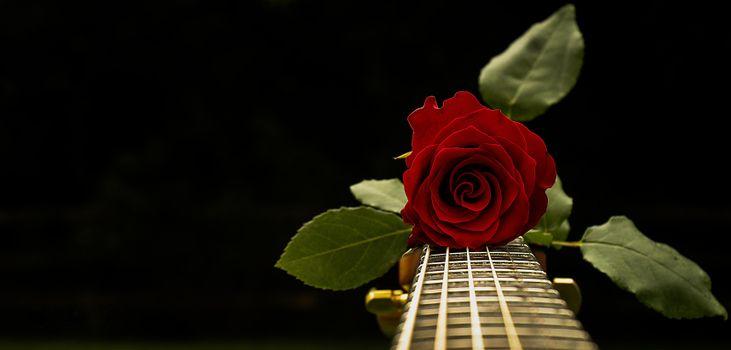 Фото бесплатно флора, гитара, цветок