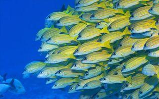 Фото бесплатно море, рыбы, косяк