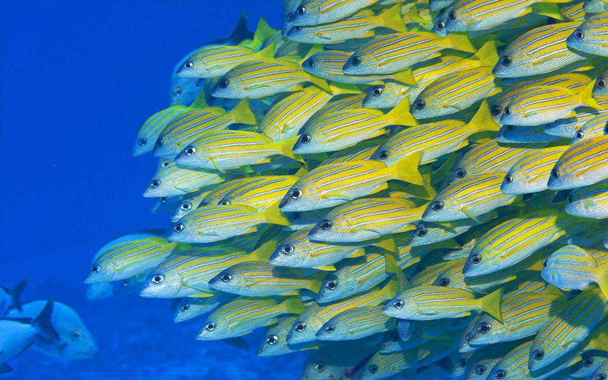Фото бесплатно море, рыбы, косяк, плавники, хвосты, полосы, подводный мир