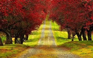 Бесплатные фото дорога, трава, деревья, листья, красные