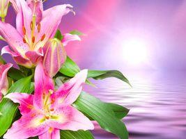 Фото бесплатно красивый фон, лилия, красивые цветы