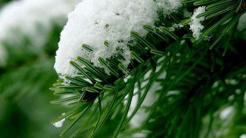 Фото бесплатно зима, лапа ели, иголки