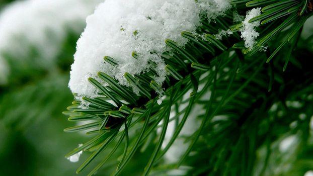Заставки зима, лапа ели, иголки