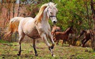 Заставки кони, лошади, грива, хвост, грация, бег
