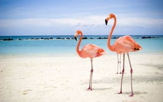 Photo free pink flamingos, neck, beak