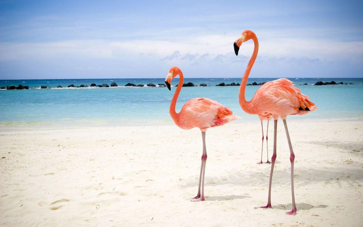 Фото бесплатно розовые фламинго, шея, клюв - на рабочий стол