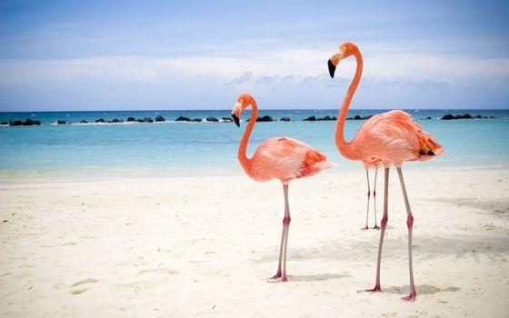 Заставки розовые фламинго, шея, клюв