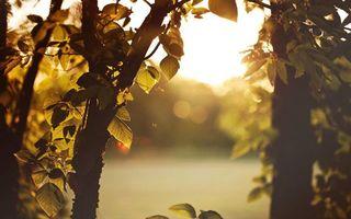 Фото бесплатно утренний рассвет, листья деревьев, природа