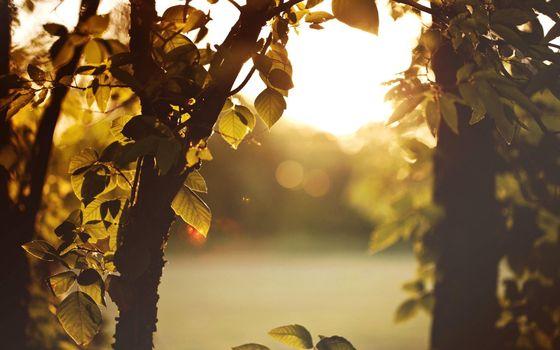 Заставки утренний рассвет,листья деревьев