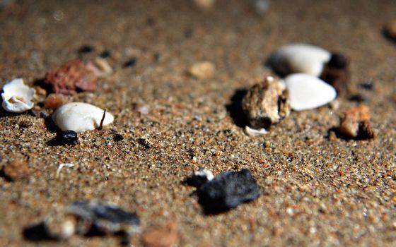 Фото бесплатно ракушки, галька, берег
