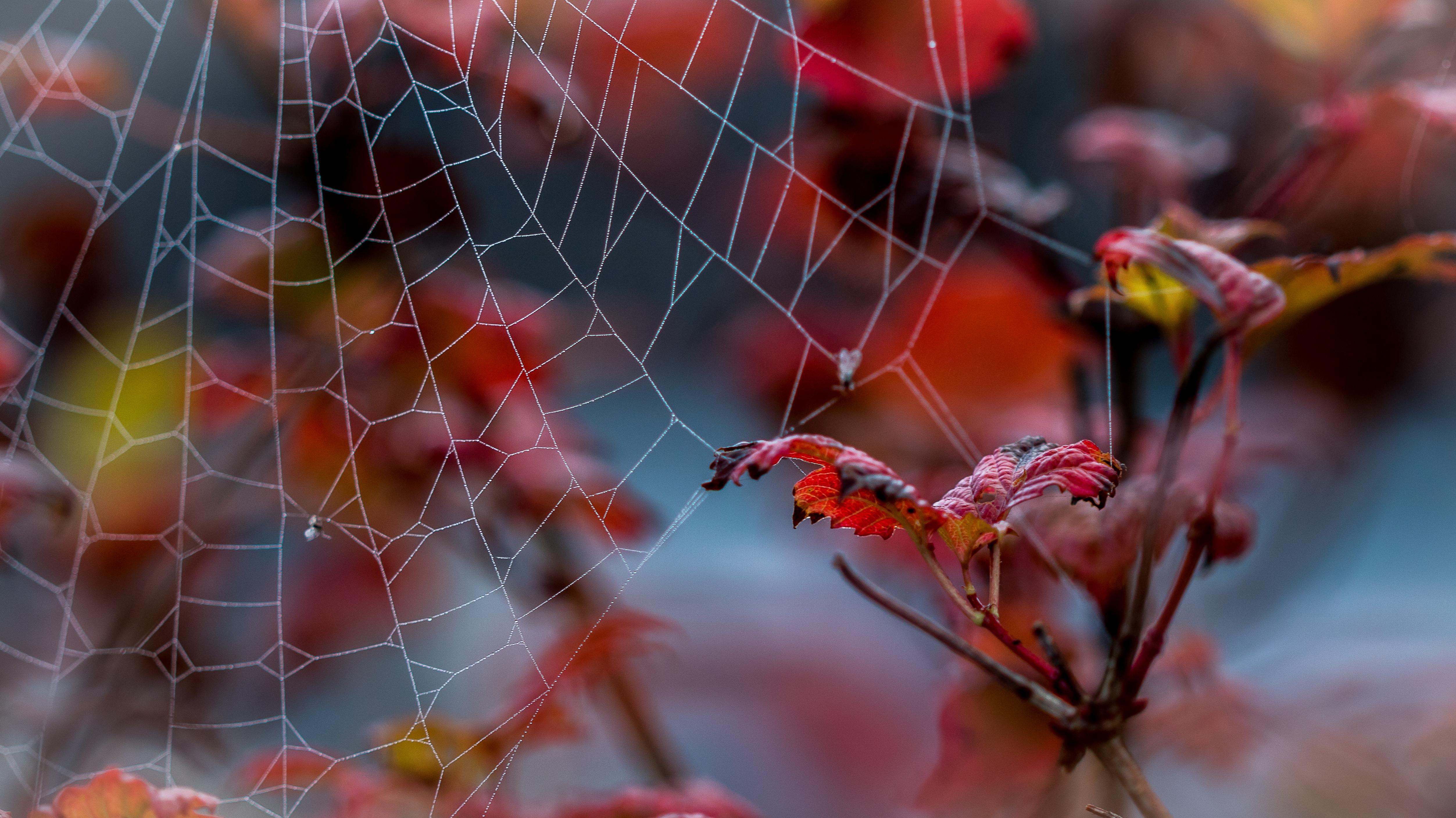 Обои осень, ветка, листья, паутина