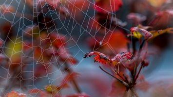 Заставки осень, ветка, листья, паутина, макро