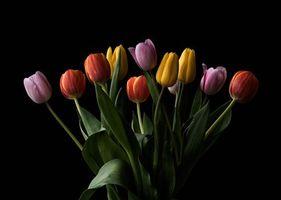 Фото бесплатно тюльпаны, букет, цветы