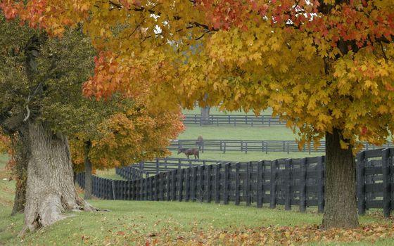Photo free fences, pens, pasture