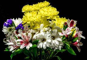 Фото бесплатно Цветы, черный фон, хризантемы, букет, крупным планом, ромашка, цветок