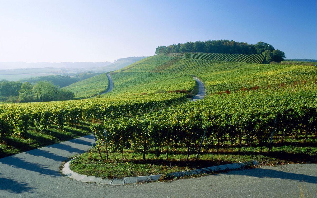 Фото бесплатно холмы, дорога, сад, виноградники, деревья, небо, пейзажи