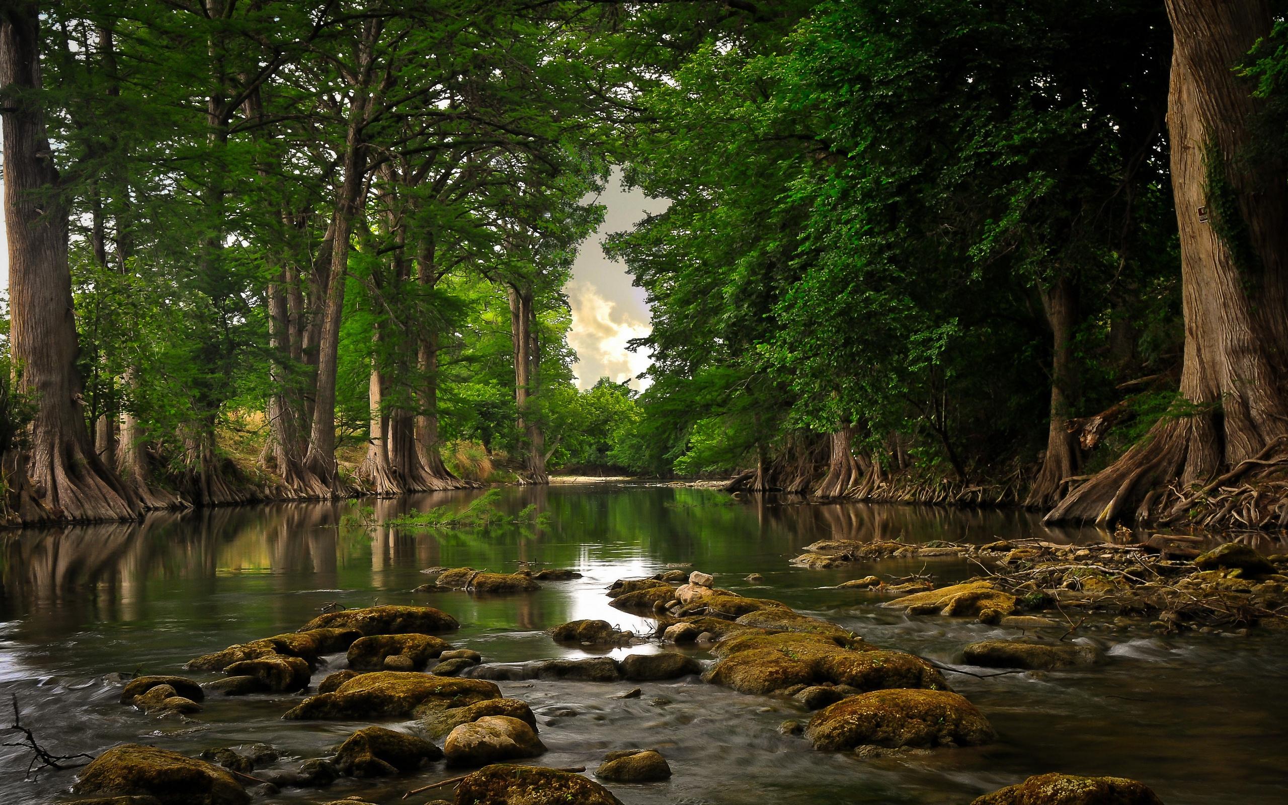Разветвляющаяся река бесплатно