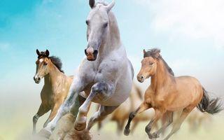 Заставки лошади, кони, гривы, хвосты, бег, пыль